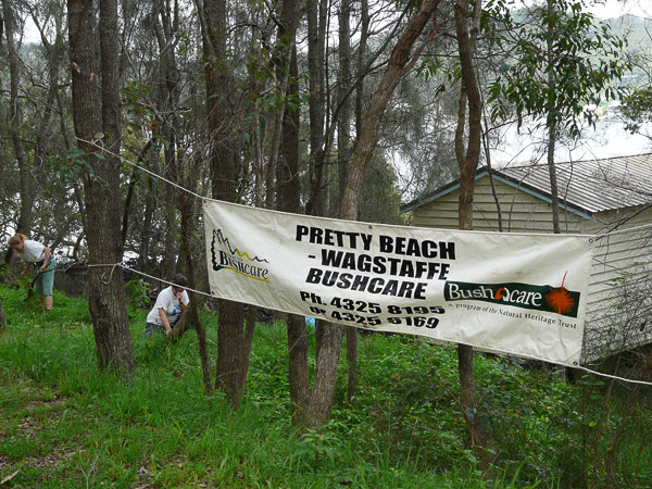 Pretty Beach Wagstaffe Bushcare